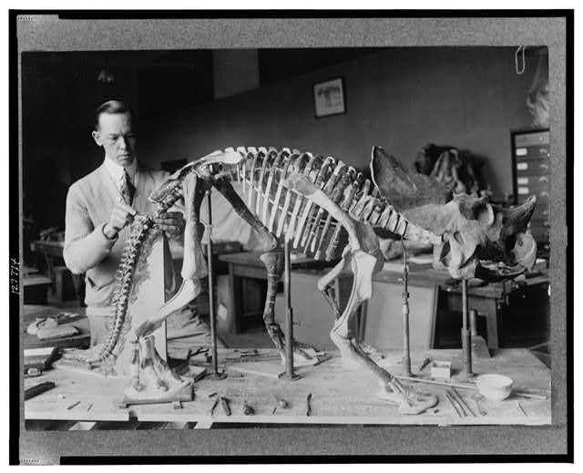 Paleontologist Norman Ross preparing the skeleton of a baby dinosaur circa 1921. (Library of Congress)