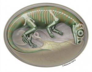 baby dinosaurs image